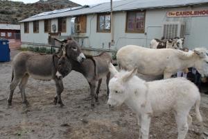 Donkeys, donkeys everywhere!