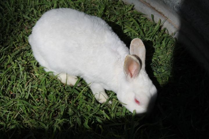 An albino bunny!!!!!!!