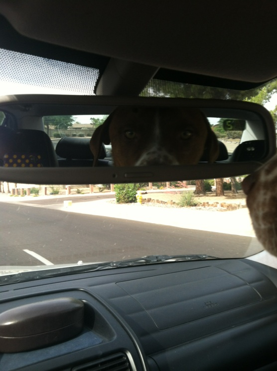 "And then would ""peek a boo!!"" at himself in the rearview mirror before slouching again & repeating.  It was so cute!"